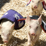 Fundraising event – Pig Race